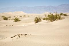Dried desert gras in mesquite flats sand dunes Stock Photos