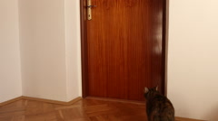 Cat opens the door Stock Footage