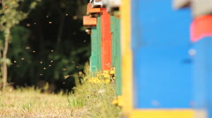 The entrance to a honey bee box - stock footage