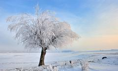 Hoar-frost on tree in winter Stock Photos