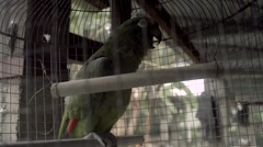 Green parrot in cage rainy day 02 Stock Footage