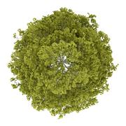 Stock Illustration of top view of birch tree isolated on white background