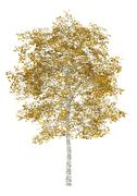 fall birch tree isolated on white background - stock illustration