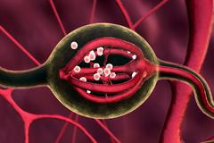 gland, neuron - stock illustration
