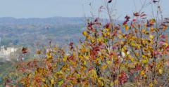 4K, Autumn in upstate NY - stock footage