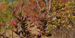 4K, Autumn in upstate NY, P1160099 - stock footage