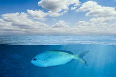 Underwater and Lonely Fish Stock Photos