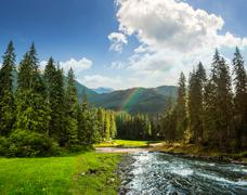 Mountain river in pine forest at sunrise Stock Photos