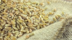 Portion of green spelt (not loopable) Stock Footage