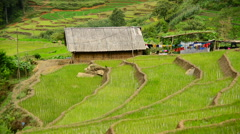 Farm House Surrounded by Rice Terraces in Valley -  Sapa Vietnam Stock Footage