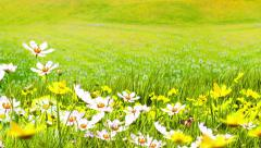 Green Meadows and Flowers Stock Footage
