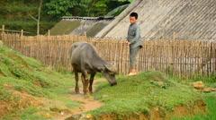 Boy Tending to Livestock on a Rice Farm  - Sapa Vietnam Stock Footage