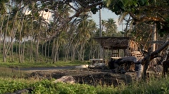 Caribbean Roadside shack Palm Trees pan Stock Footage
