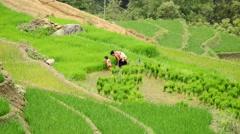 Vietnamese Family Working on a Rice Farm  - Sapa Vietnam Stock Footage