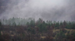 Fog and Rain in the Forest - stock footage