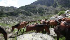 A group of wild horses in the mountains Stock Footage
