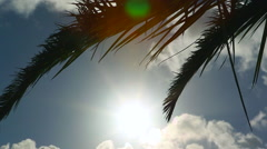 Palm Tree Leaves Wind Sun Silhouette close Stock Footage