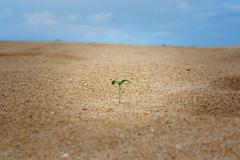 Leaf Growing in Desert - stock photo