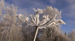 Beautiful hoarfrost rime on winter time plant Stock Footage