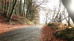 Sun rays in autumn background, fall season, golden leaves - stock footage