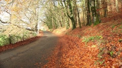 Sunny autumn leaves, beautiful trees and rural path at fall season - stock footage