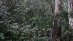 Temperate Rainforest Wide Panning Shot Stock Footage