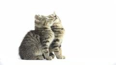 Two cute tabby kittens Stock Footage