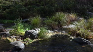 Stock Video Footage of 4K Peaceful Running Brook Scenic