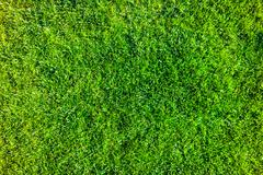 Cultivated green grass in bright colors Stock Photos