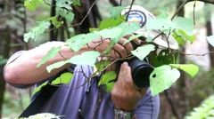A man photographs the leaves Stock Footage