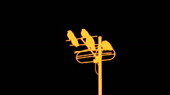 golden crows on the antenna, black background - stock footage