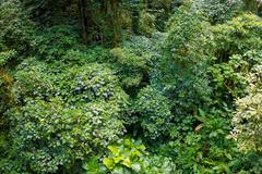 Rain forest from above. Monteverde, Costa Rica. Stock Photos