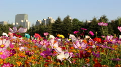 colorful flowers sway in breeze in a city park - stock footage