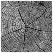 vector natural illustration of engraving saw cut tree trunk. abstract sketch of - stock illustration