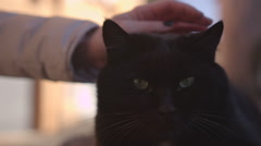 Stock Video Footage of Black cat being petted by female hand