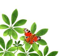 Stock Photo of Green leaves and butterfly