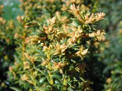 detail of flowering shrubs - stock photo