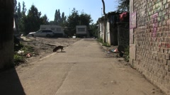 Dog in romani camp Stock Footage