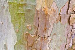 Close-up of the camouflage pattern of a plane tree Stock Photos