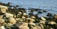 Green sea grass n stones at Riga Beach in Latvia Stock Footage