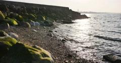 Green sea grass on stones at Riga Beach in Latvia Stock Footage