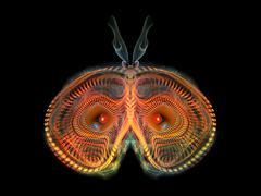 Stock Illustration of Beautiful Butterfly
