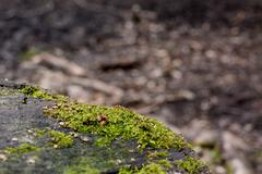 Detail of green moss on a tree trunk - stock photo