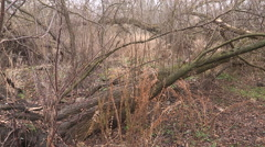 Major tree damage after Ontario ice storm of 2013 hits Guelph Stock Footage