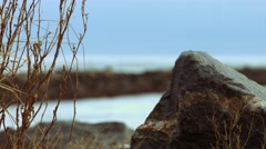 Lonely Tree During The Winter at the Beach Stock Footage