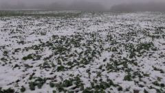 Dark winter morning fog and agriculture field with snow and rapeseed Stock Footage