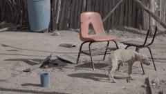 Malnourished puppy - stock footage