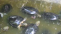 Group of Tortoises Stock Footage