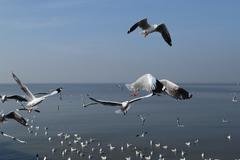 Stock Photo of seagull flying under the sky at bang pu beach
