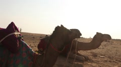 Camel in the desert Stock Footage